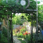 Grape Arbour At Side Garden