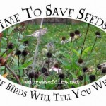 Time To Save Seeds? The Birds Will Tell You When.
