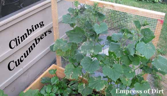 Keep Critters Out of Veggie Beds with These Screens ... |Vegetable Garden Screen