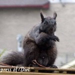 Watch Squirrel Explosion And Other Squirrelly Tales
