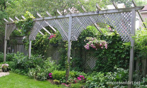 Garden fence screen privacy ideas empress of dirt for Garden screening ideas