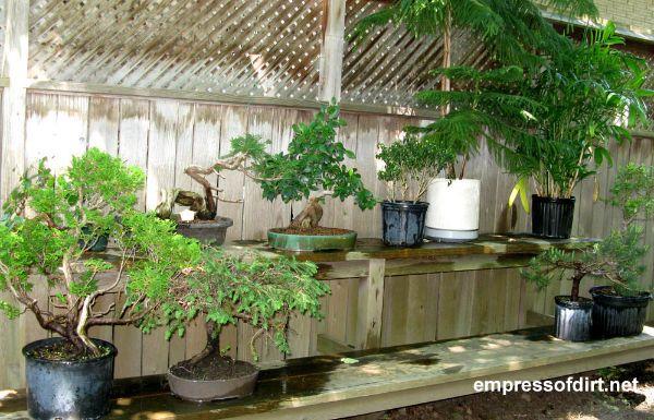 Shelves along garden fence used for potting plants.