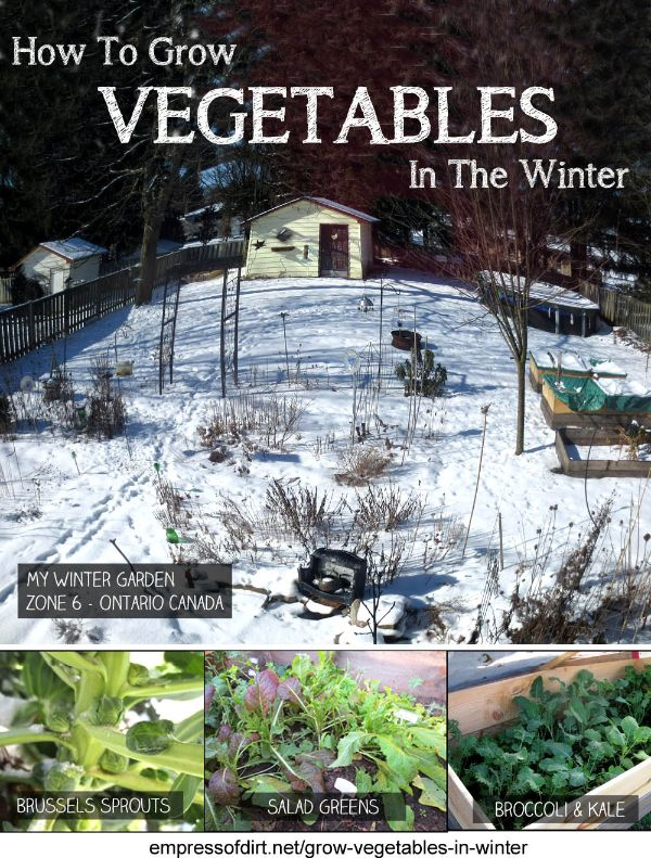 Grow winter kale, broccoli, spinach, lettuces, mesclun mix, carrots, and more! This is one of the best kept secrets in gardening: you really can grow vegetables year round in cold climates. Come see what you need to get started.