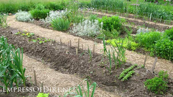 Vegetable bed with straw paths.