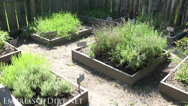 Square raised garden beds with herbs.