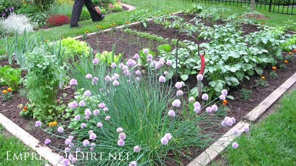 In-ground vegetable garden with log edging.