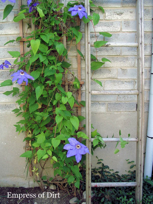 20+ Ways to create vertical interest in the garden with arbors, trellis, obelisks, and more. Wooden ladder for climbing clematis.