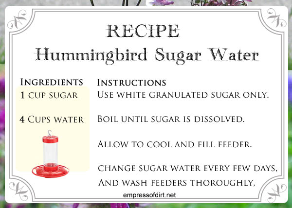 Recipe for making hummingbird sugar water