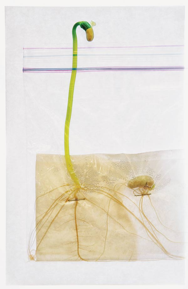 Seed in a bag | Gardening Lab For Kids: 52 Fun Experiments