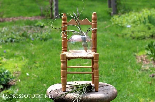 Air plants - lots of creative ways to display them