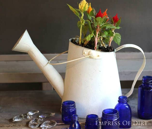 Watering can garden art gallery - use leaky ones as planters