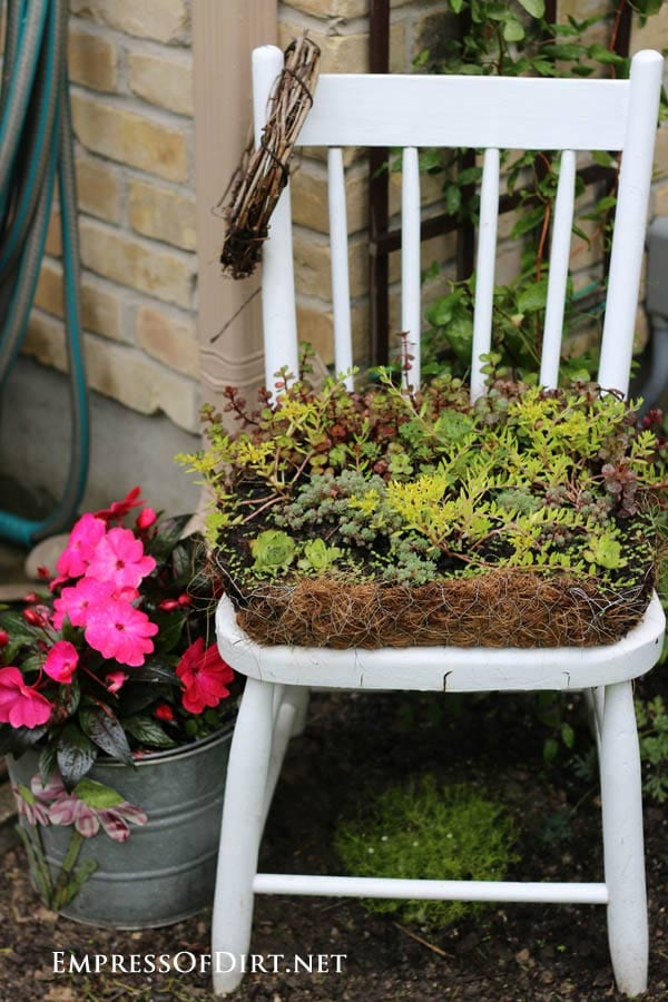 Chair planted with succulents: Gallery of garden art chair ideas
