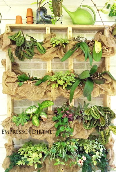 Outdoor Succulent Plant Shelf