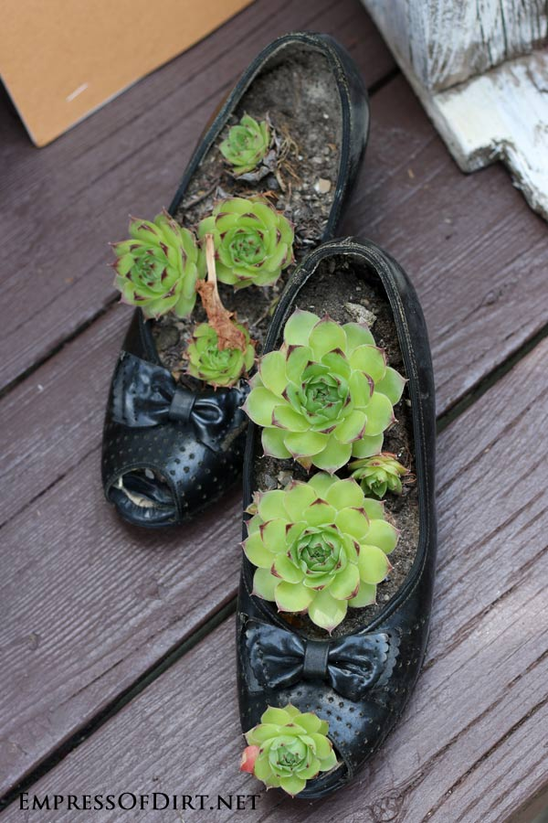 Diy succulent garden art ideas empress of dirt plant succulent shoes 9 diy succulent garden ideas sisterspd