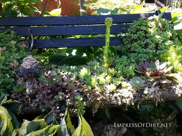 Plant a succulent garden bench: 9+ DIY Succulent Garden Ideas