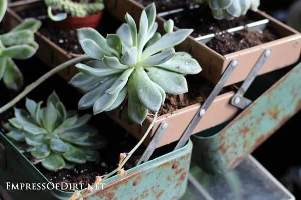Tackle box planter: 9+ DIY succulent garden ideas