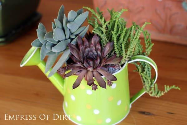 Plant a succulent watering can: 9+ DIY Succulent Garden Ideas