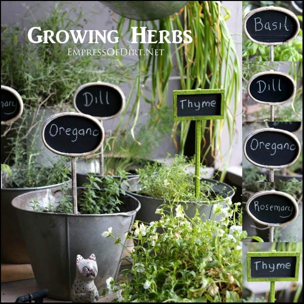 growing herbs in sun and part shade empress of dirt. Black Bedroom Furniture Sets. Home Design Ideas
