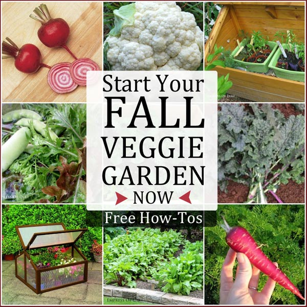 Start your fall veggie garden now empress of dirt for Starting a vegetable garden
