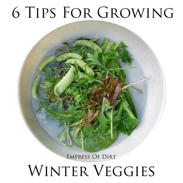 6 Tips For Growing Veggies In the Winter   empressofdirt.net