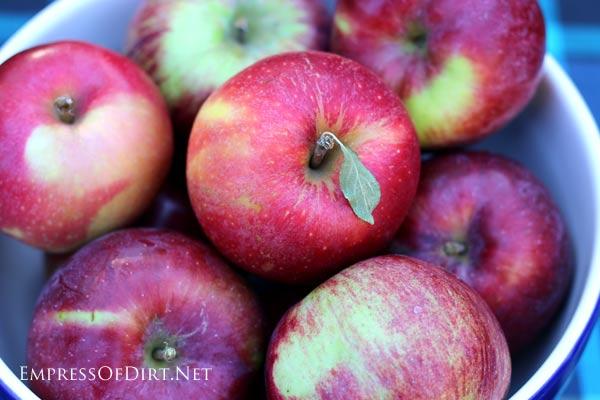 Best apples for baking pies | empressofdirt.net