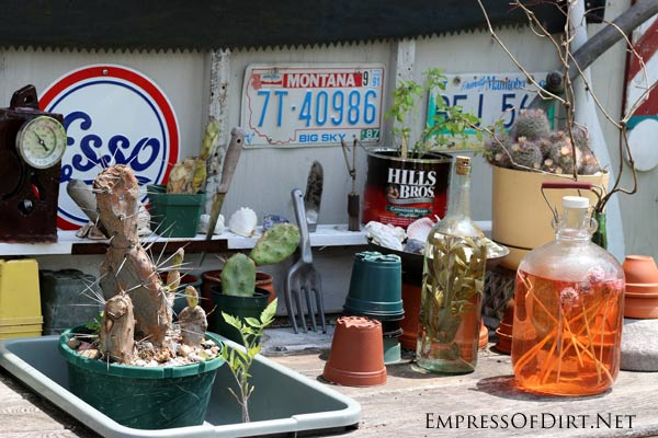 Potions and cacti on the Hairy Potter Garden Bench | empressofdirt.net