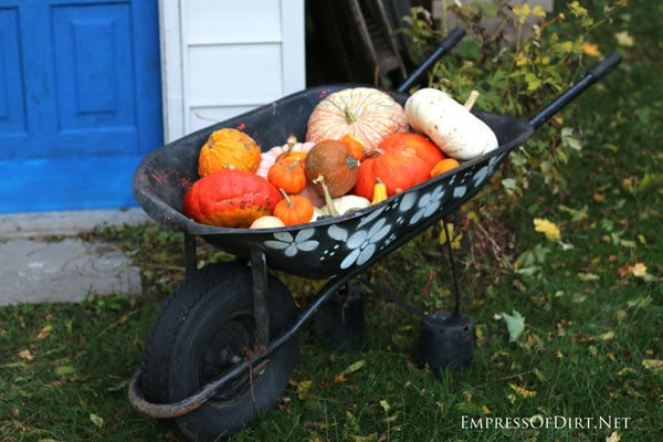 Wheelbarrow filled with pumpkins and gourds | empressofdirt.net