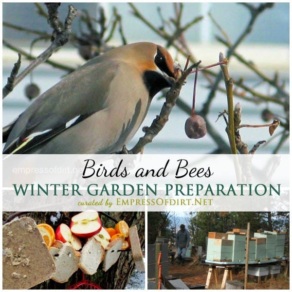 Tips from experienced gardeners on winter garden prep including providing food and habitat for birds and bees | empressofdirt.net