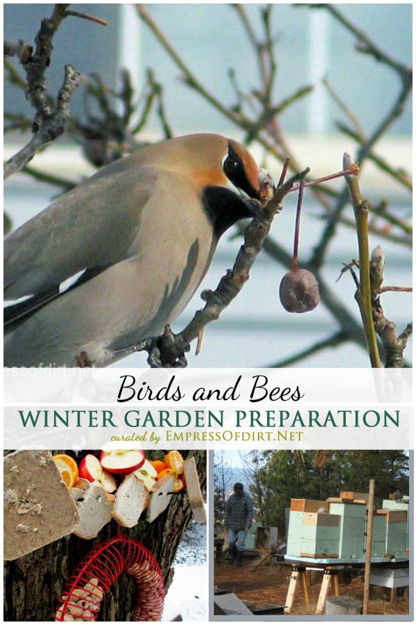 Winter Garden Preparation: Birds and Bees | There are many things we can do to help ensure the birds, bees, and other beneficial creatures inhabiting our winter gardens have what they need to survive until the weather warms in spring.