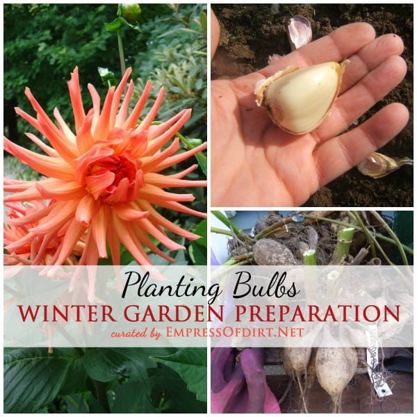 Tips from experienced gardeners on winter garden prep including pllanting Bulbs | empressofdirt.net