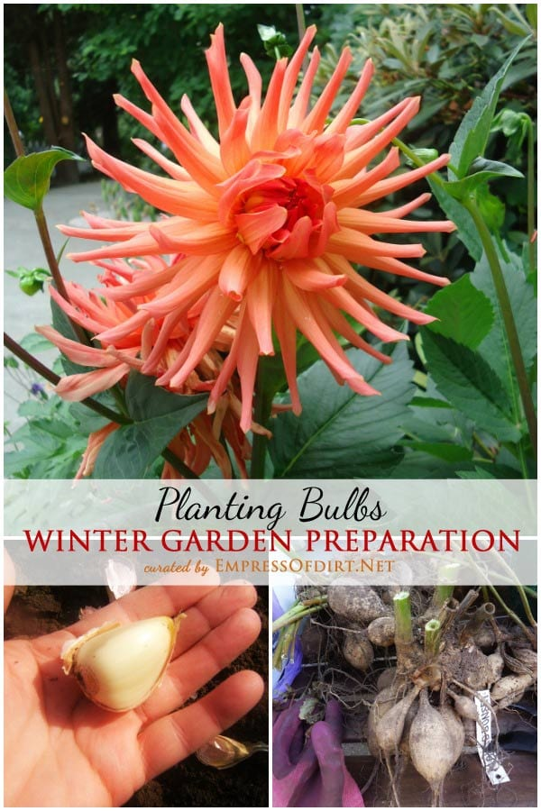 Winter Garden Prepartion: Planting Bulbs | Planting bulbs for spring is not an essential task but it sure pays off in those early spring days as these bursts of colour appear while we're still dealing with the final snowfalls. This collection of winter garden prep tips comes from dedicated organic gardeners.