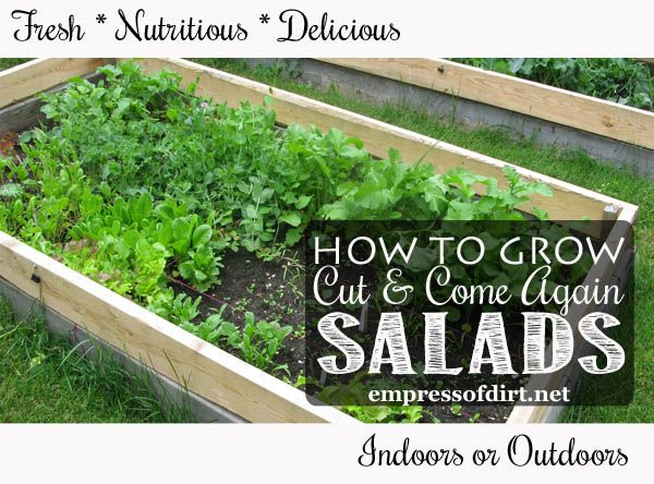 Plant salad greens in the fall garden and more | empressofdirt.net