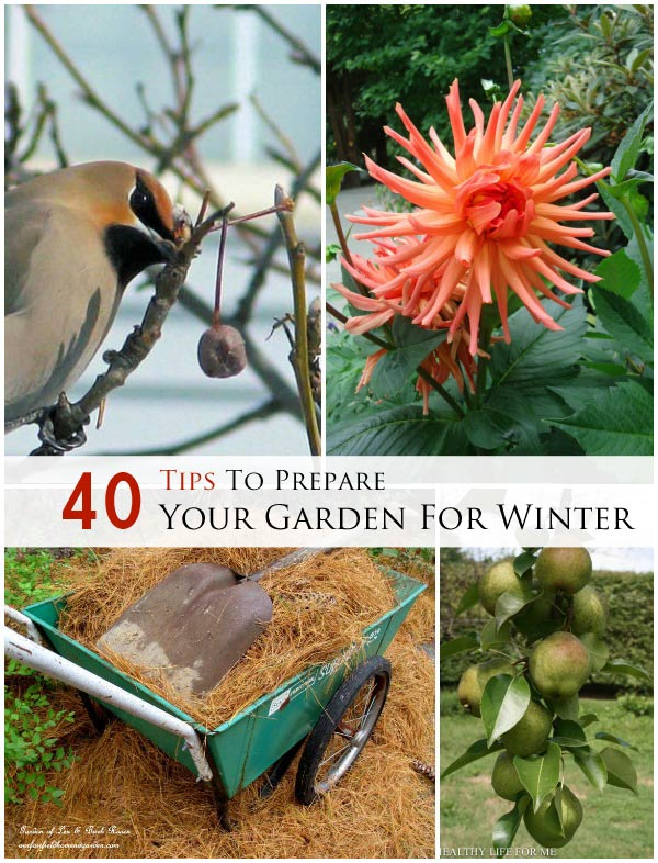 Get a jump start on spring, and enjoy some delicious winter veggies with these 40 fall garden tips. Includes ideas for mulch, bulbs, overwintering tender plants, chore checklists from experienced gardeners, and providing habitat for the birds and bees.