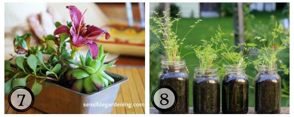 Use old cake pans to create a little garden and grow fairy carrots in jars plus more sweet DIY garden ideas at empressofdirt.net