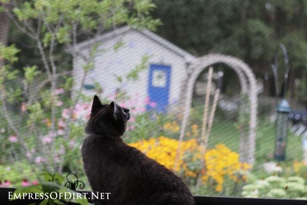 Bobo-bird-watching-2