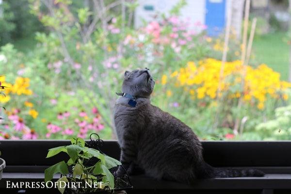 Bobo-bird-watching-3
