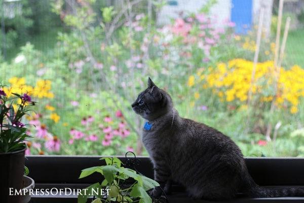 Bobo-bird-watching-4