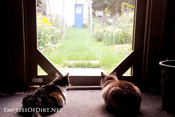 Cats-watching-garden-2