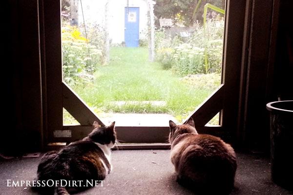Cats-watching-garden-2