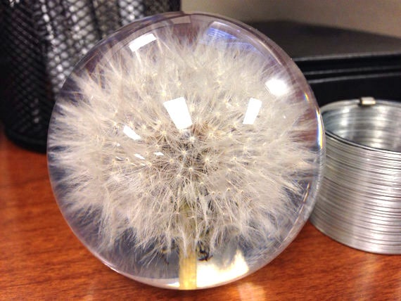 Dandelion seed paper weight by DandelionPaperWeight on Etsy