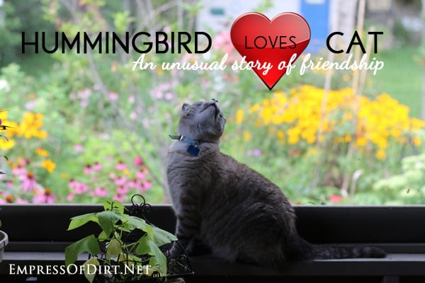 The true story of a hummingbird who fell in love with a cat