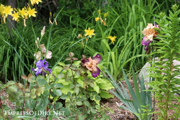 A flower gallery featuring a rainbow of iris blooms : many different colours of irises