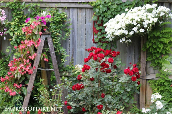 Old wooden ladder with hanging basket and roses | 21 Gorgeous Flower ...