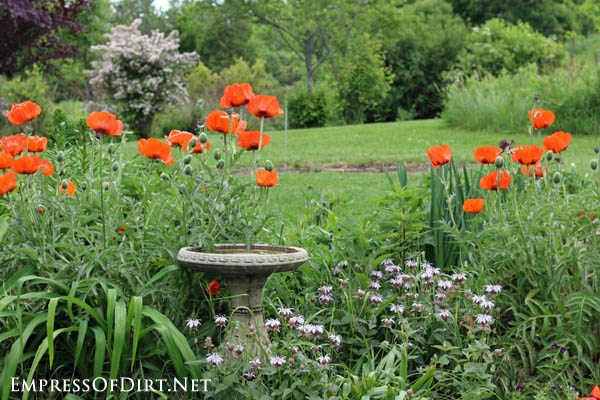 Poppies and bird bath | 10 Irresistible Reasons To Grow Poppies in Your Garden