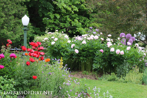 Poppies and peonies | 10 Irresistible Reasons To Grow Poppies in Your Garden