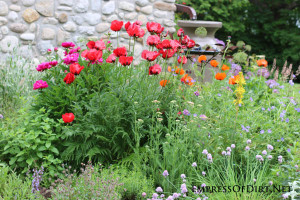10 Irresistible Reasons to Grow Poppies