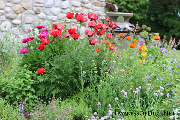 Gorgeous clashing colours | 10 Irresistible Reasons To Grow Poppies in Your Garden