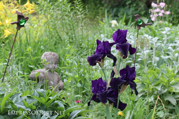 A flower gallery featuring a rainbow of iris blooms : dark purple irises
