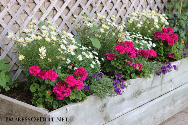 Daisies and pink geraniums in raised wooden planter | 21 Gorgeous Flower Planter Ideas