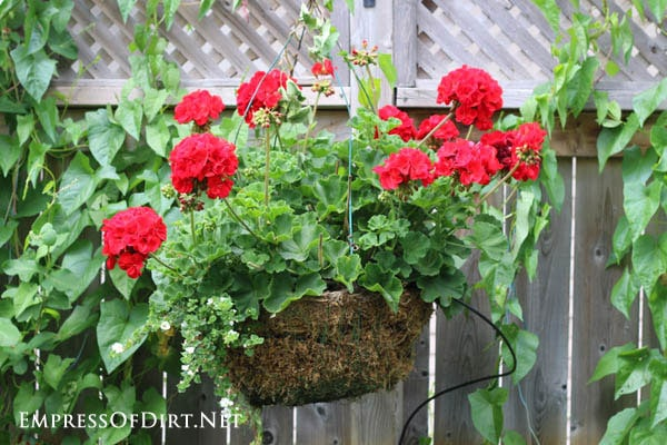 Traditional hanging wire basket with geraniums | 21 Gorgeous Flower Planter Ideas